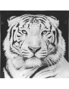 CEANOTHE Toile tigre blanc 30 x 30 cm