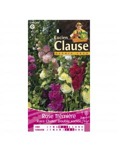 LUCIEN CLAUSE Rose Trémière Race Chater Double variée *