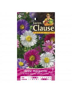 LUCIEN CLAUSE Reine Marguerite à Fleur Géante Simple variée *