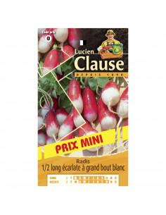 LUCIEN CLAUSE Radis 1/2 long écarlate à grand bout blanc