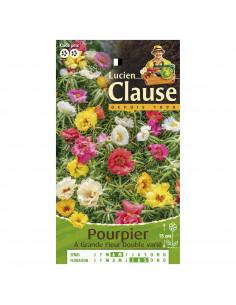 LUCIEN CLAUSE Pourpier à Grande Fleur Double varié **