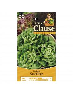 LUCIEN CLAUSE Laitue sucrine **