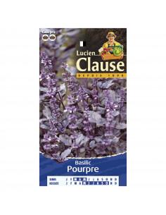 LUCIEN CLAUSE Basilic pourpre **