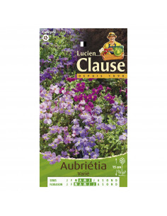 LUCIEN CLAUSE Aubrietia hybride mix*