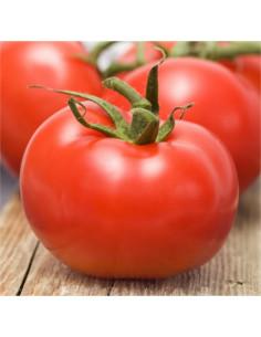 LES DOIGTS VERTS Tomate Talata Merveille Boite Métallique