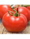 LES DOIGTS VERTS Tomate Talata Merveille Hybride F1 - Adaptée à la culture tropicale - Boite Métallique