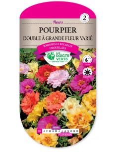 LES DOIGTS VERTS Pourpier Double A Grande Fleur varié