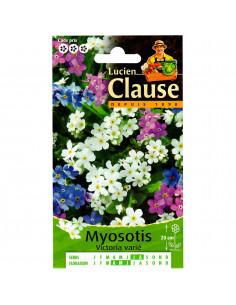 LUCIEN CLAUSE Myosotis Victoria varié ***