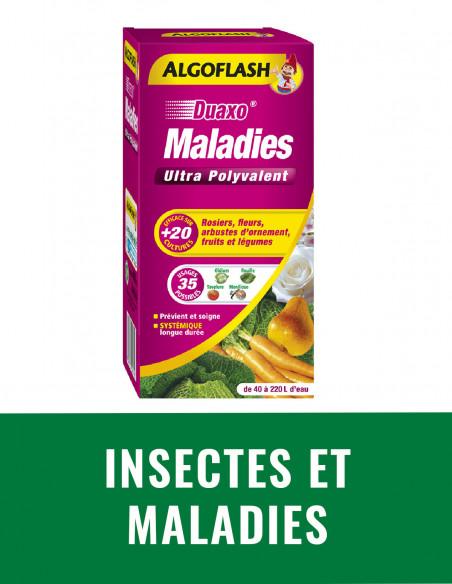 Insectes et maladies