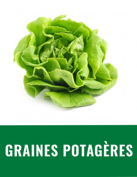 Graine potagère